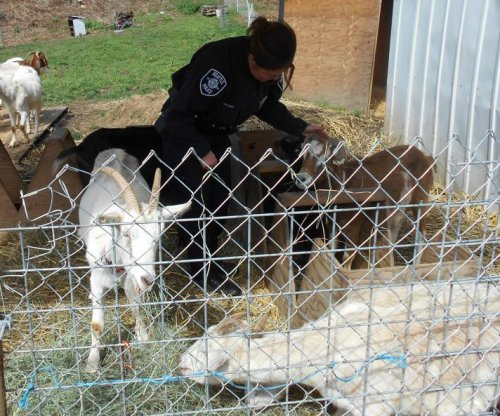 Seattle police corral goats after 'brief hoof chase'