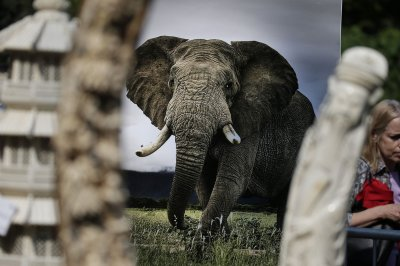 Trump admin lifts ban on importing endangered elephant remains from Africa