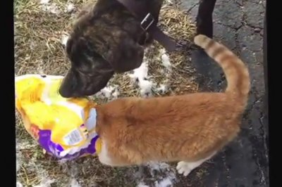 Dog comes to the rescue of cat with pizza rolls bag stuck on its head