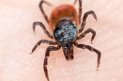 Lyme disease striking more Americans in more states