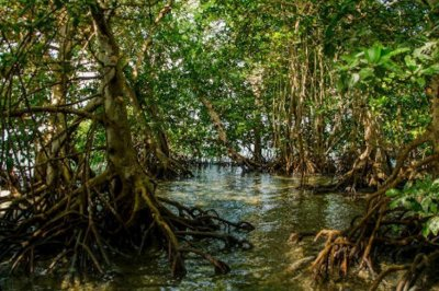 Hurricanes benefit mangroves in Florida's Everglades, study finds