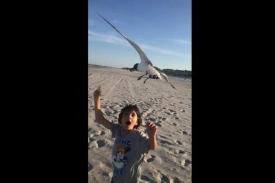 Boy holding food meets wrath of hungry seagulls on New Jersey beach
