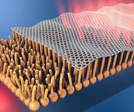 New coating may allow graphene to be used in the human body