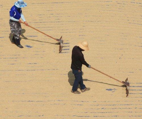 Rumors of rice aid to North Korea circulate as prices skyrocket