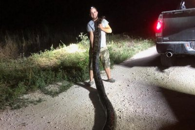 Florida hunter bags record 17-foot, 5-inch python