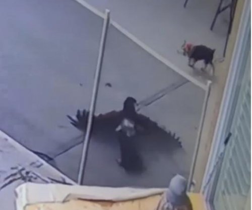 Las Vegas woman rescues puppy from attacking hawk