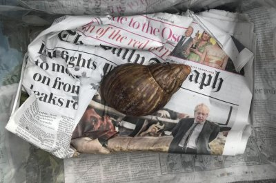 , Giant African land snail found at package distribution center in Britain, Forex-News, Forex-News