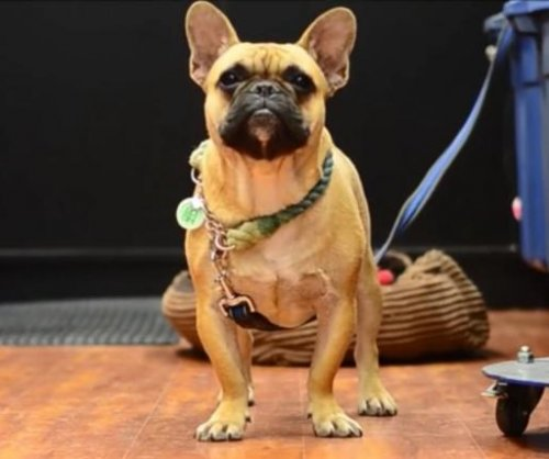 French bulldog vocalizes 'love' for his 'mom' in Canada