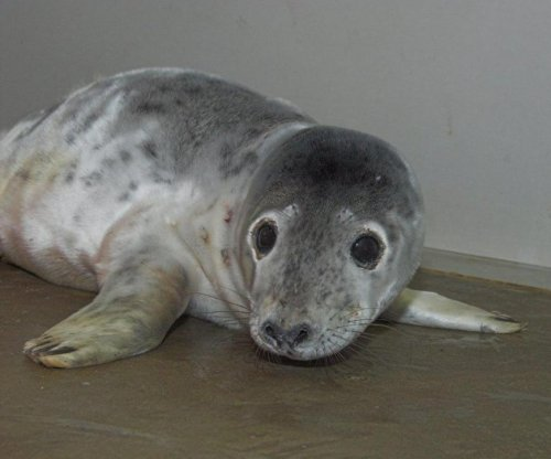 Baby seal rescued after wandering into Scottish woman's home