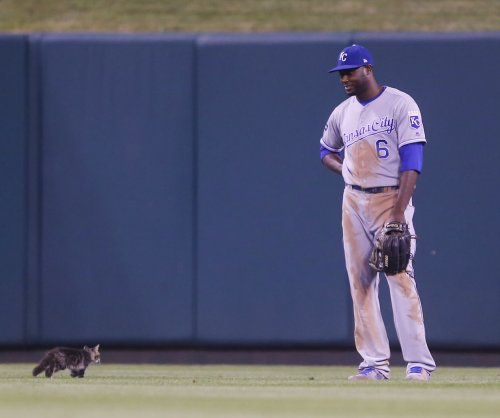 #rallykitty: St. Louis Cardinals credit stray cat as they claw past Royals 8-5