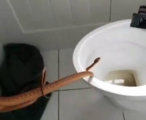 Venomous snake found just under lid of family's toilet