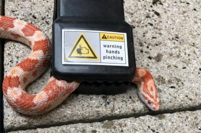 Snake rescued from mousetrap in London