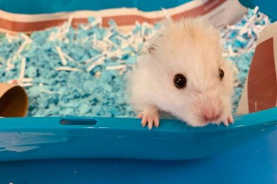 Escaped hamster braves freezing temperatures to get to candy store