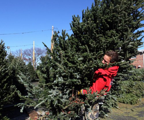 Scientists try turning Christmas trees into plastic
