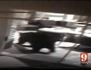 Florida bear attack: Black bear mauls woman's face