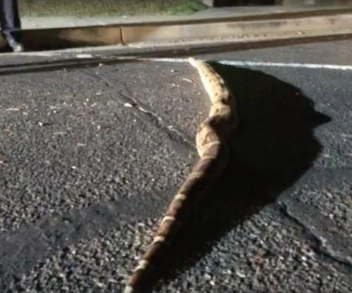 7-foot boa is third large snake captured by Arizona fire department