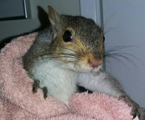 Police capture squirrel who ransacked Canadian home