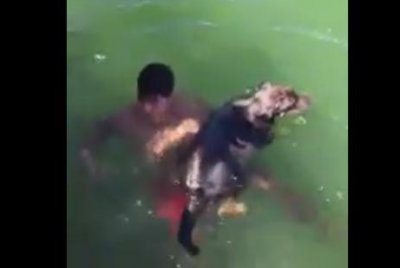 Firefighter swims into bay to rescue struggling dog
