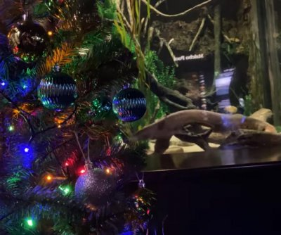 Electric eel lights Tennessee aquarium's Christmas tree