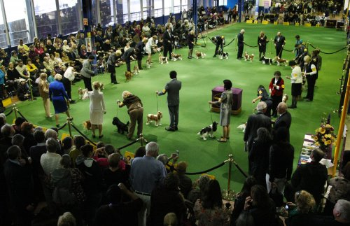 Show dog's death leaves handler unsettled