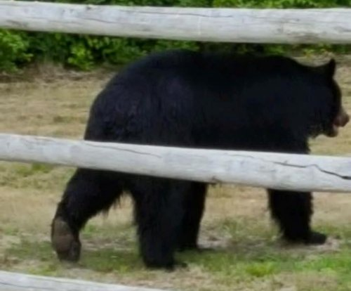 300 pound bear relocated after stealing from bird feeder