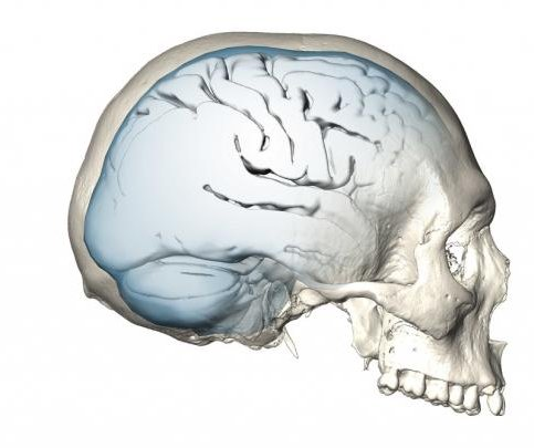 First came Homo sapiens, then came the modern brain