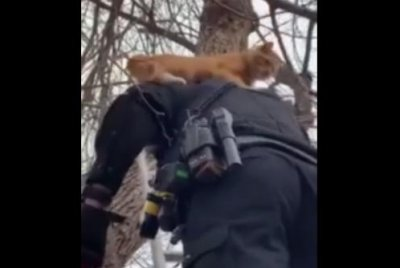 Watch:-Cat-stuck-in-tree-rides-on-officer's-shoulders