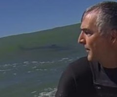 California surfer's GoPro catches great white shark inside wave