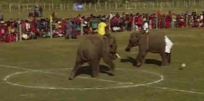 WATCH: Elephants play soccer in Nepal