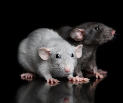 Rats are more generous when they sniff the smell of hunger