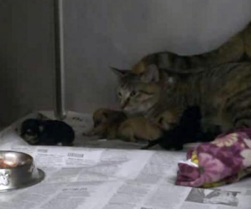 Cat nurses orphaned puppies at Utah shelter