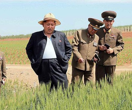 North Korea's potato rations trigger anger among farm workers