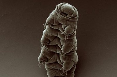'Water bears' from crashed Israeli craft believed living on moon