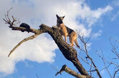 Firefighters rescue dog stranded in a tree after chasing cat