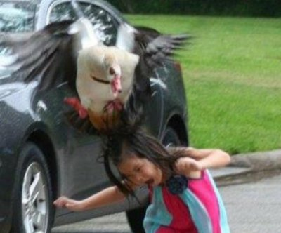 Young Houston girl's unfortunate goose encounter captured in viral photos