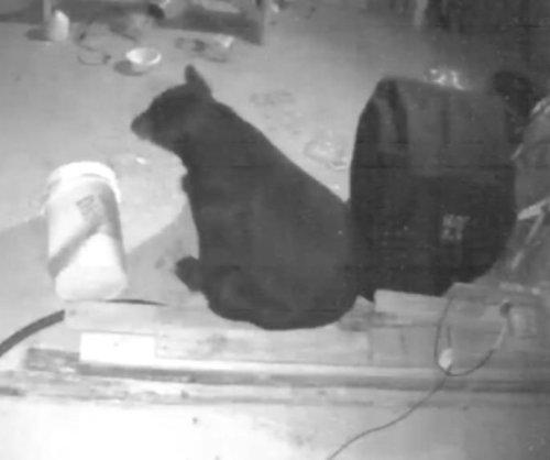 Security footage captures Florida bear's dog food raid