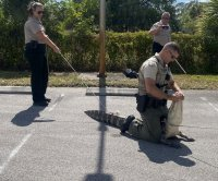'Hangry' alligator relocated after chasing customers at Wendy's