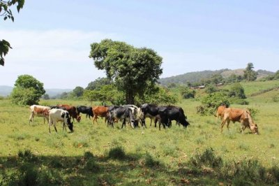 Milk-stained teeth reveal early dairy consumption in Africa