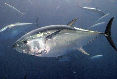 Pregnant women: eat more fish
