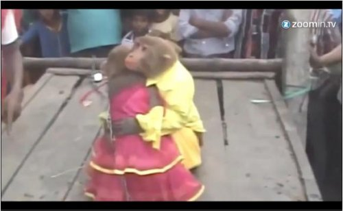 Over 200 Indian villagers attend monkey wedding