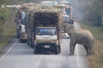 Watch:-Elephant-steals-from-passing-trucks-in-Thailand