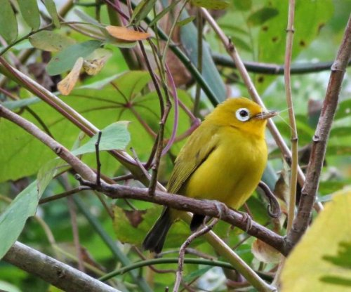 Zoologists identify two new bird species in Indonesia