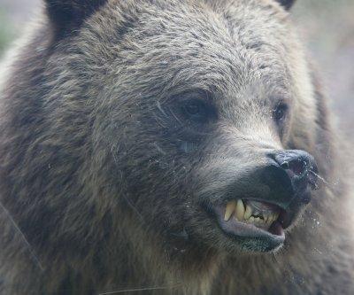 Grizzly bear kills hunter in Alaska national park