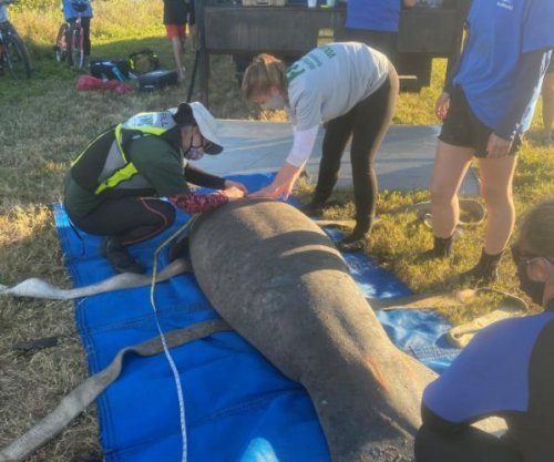 Florida wildlife officials rescue six trapped manatees
