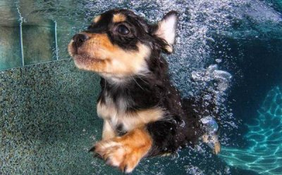 'Underwater Puppies' book charms readers with cute photos
