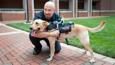 Researchers create harness that translates body language of dogs
