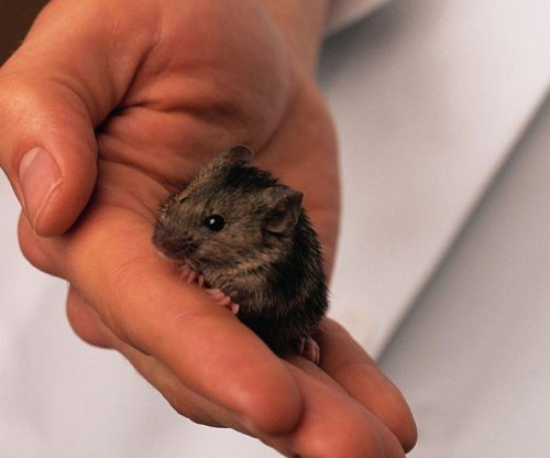 Researchers grow functioning liver tissue in mice