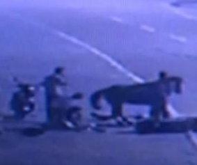 Runaway horse crashes into motor scooter in China