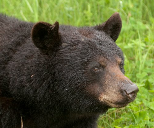 Bear wanders into Wyoming house, poops in living room