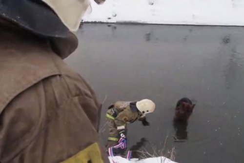 Firefighters wade into frigid pond to rescue stranded dog